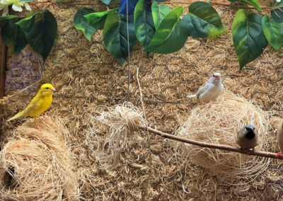 Picture of live yellow bird, brown and white bird, and two brown birds resting on branches and nests